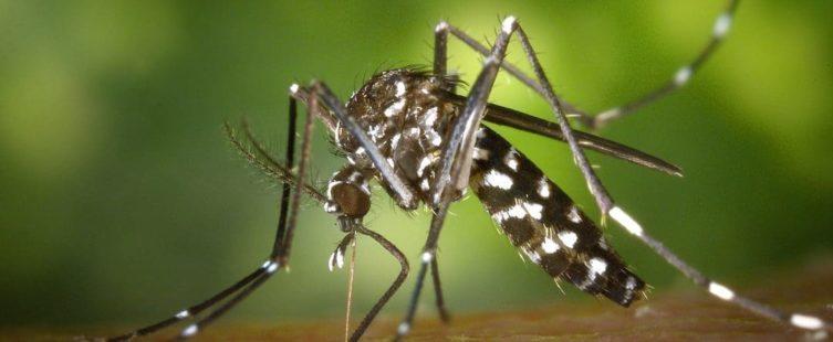 come difendersi dalle punture delleA zanzare africaneAAC